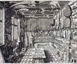 Gabinete de Historia Natural - Museo de México