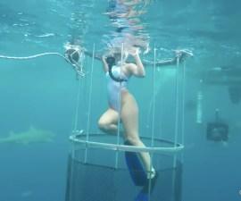 Modelo vs Tiburón