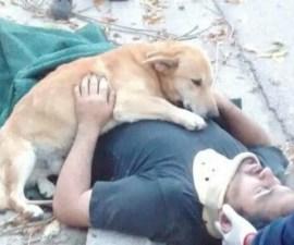 Perrito abraza a su dueño