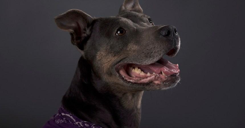 Animales - Perro