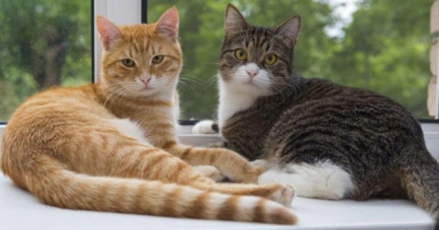 Imágenes de gatitos - Ataque en Barcelona