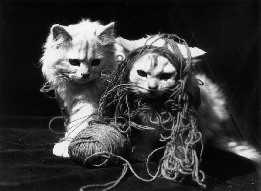 dos gatos jugando con estambre