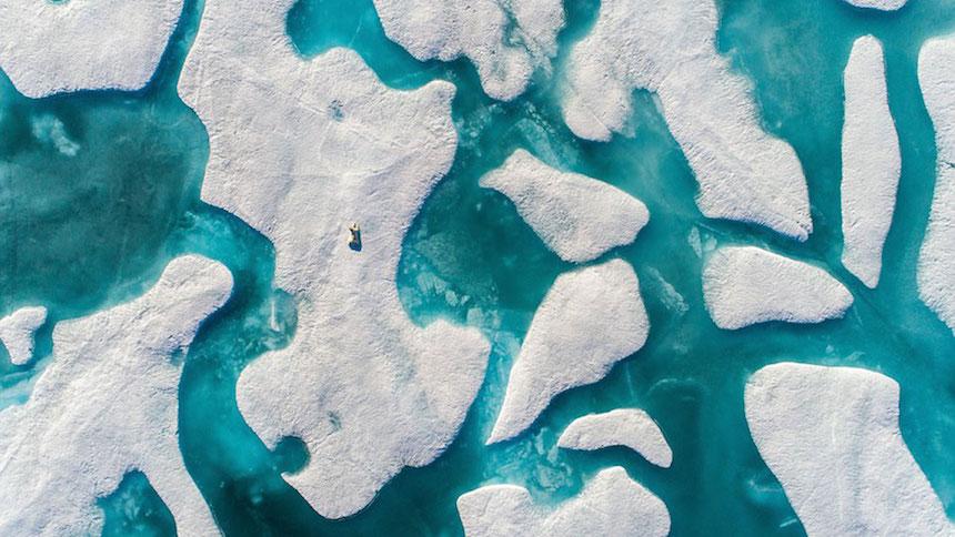 Oso polar - Pista del acertijo