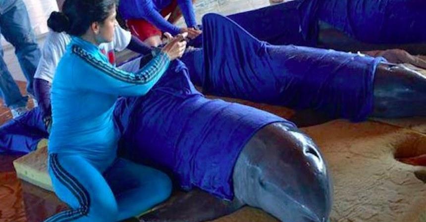 Rescatistas evacuando delfines en Cuba