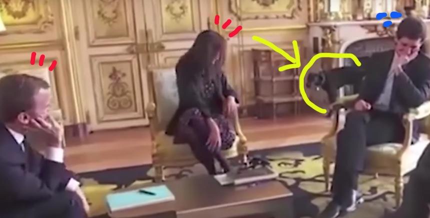 El perrito de Macron se orina en público