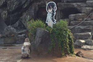 Japón - Un pingüino y su novia de cartón