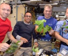 Astronautas que cultivaron lechuga en el espacio