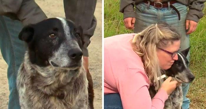 Esta es la historia de Max, el perrito que protegió a una niña de 3 años y ahora es policía honorario