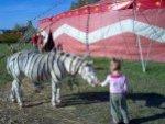 magyar_zebra.JPG