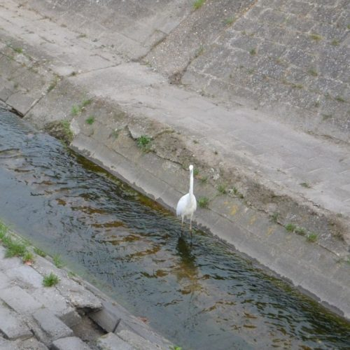 Jó hír: már kitisztult az Ikva vize