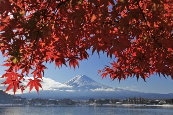 Kawaguchiko momiji matsuri – Autumn leaves festival