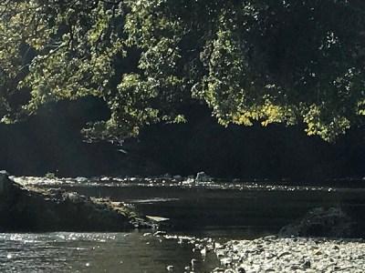 田村神社の御手洗川