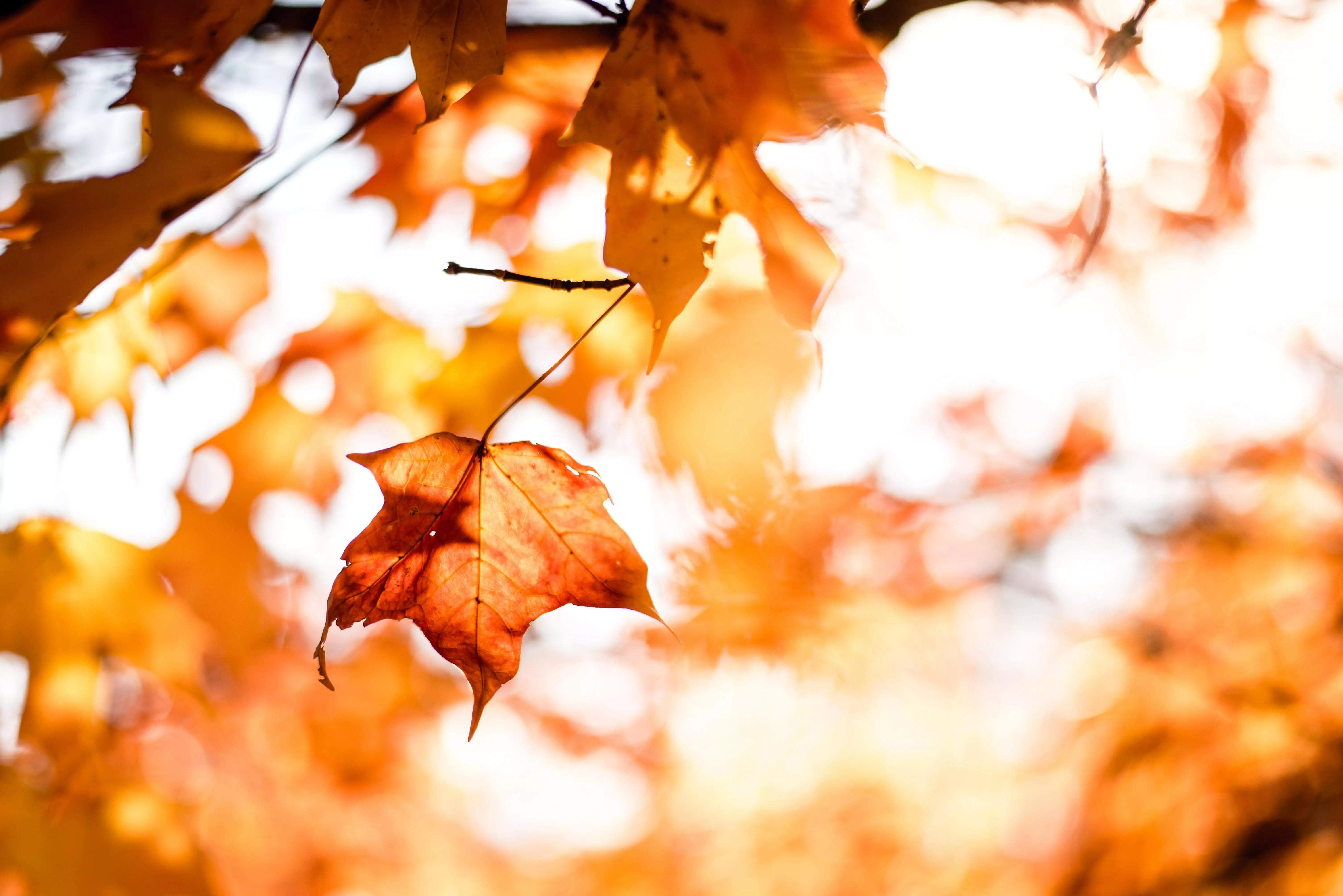 Bild på höstlöv i solsken