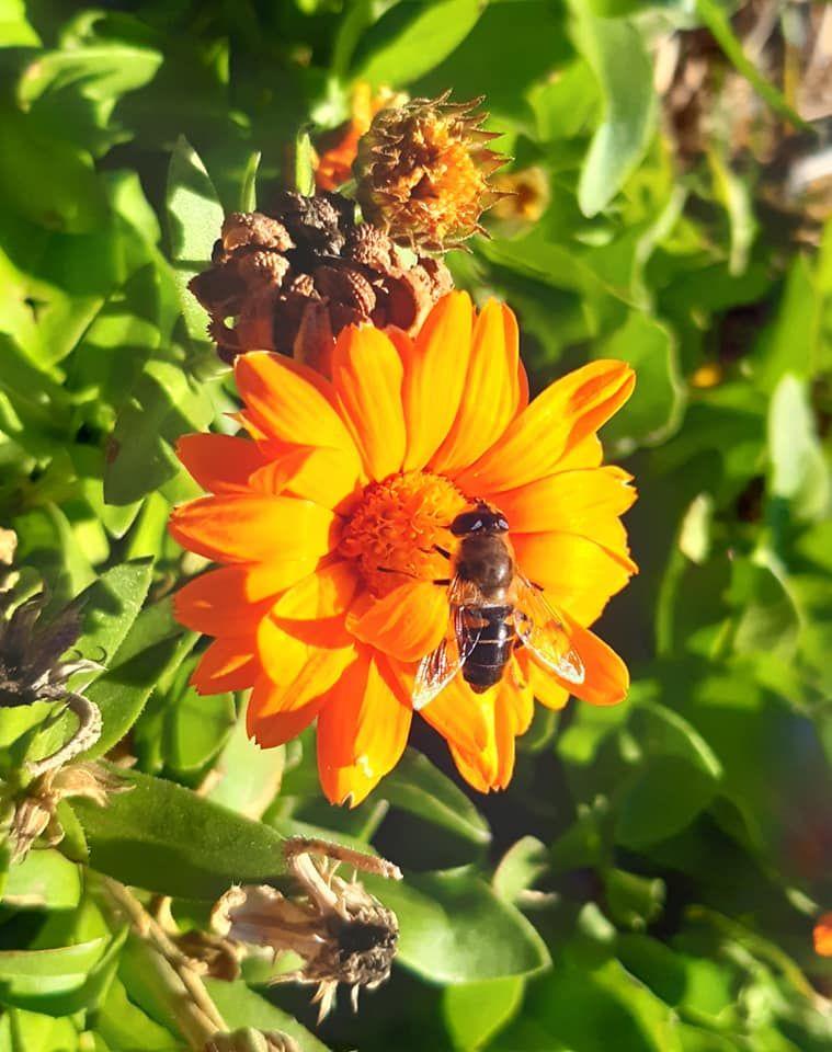 Flora de Arenillas