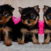 Cachorros-Soriena1 Cachorros