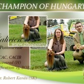 NEW-CHAMPION-OF-HUNGARY Exposiciones