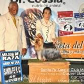 CH.-Cocker-Liberi-Gaias131 Exposiciones