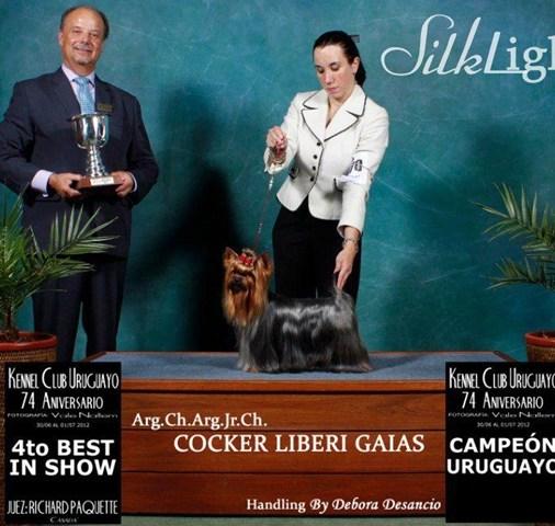 CH.-Cocker-Liberi-Gaias15 Mult. & Int Ch. Cocker Liberi Gaias