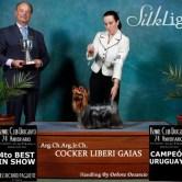 CH.-Cocker-Liberi-Gaias151 Exposiciones