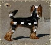 Ch-Rubi-de-Ilberri8 Ch Rubí de Ilberri