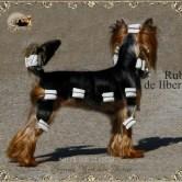 Ch-Rubi-de-Ilberri8 Imágenes