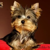 Yvette-Liberi-Gaias1 Cachorros