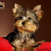 Yvette-Liberi-Gaias2 Cachorros