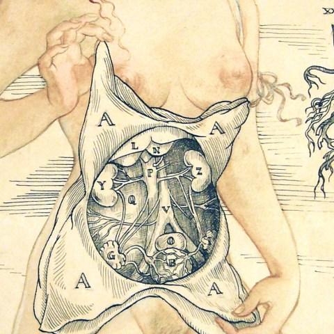 Anatomical Venus, detail