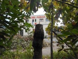 alberi-caserma-pompieri-5