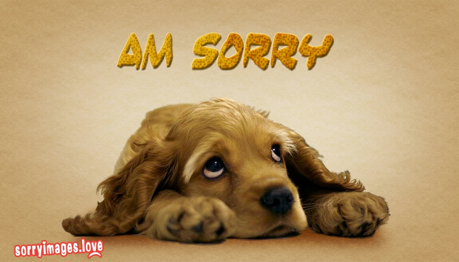 Cute Girl Say Sorry Wallpaper Sorry Dog Images