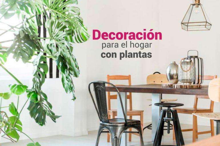decoracion para el hogar con plantas