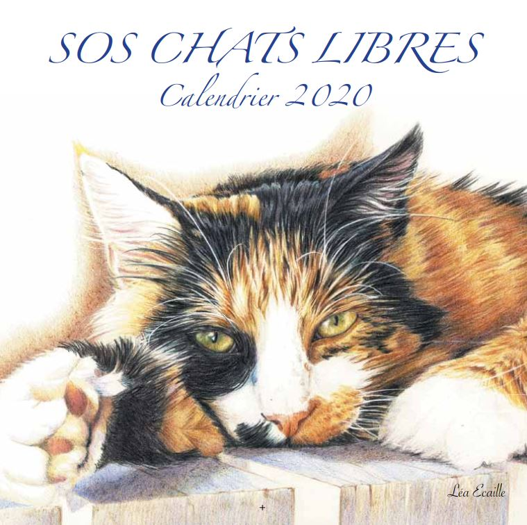 Calendrier Chat 2020.Calendrier 2020