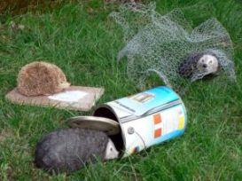 rete - L'importanza di salvare un riccio