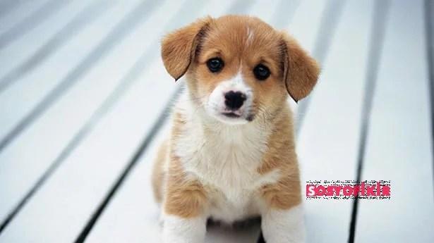 Bir hayvanı sahiplenmek için 8 neden