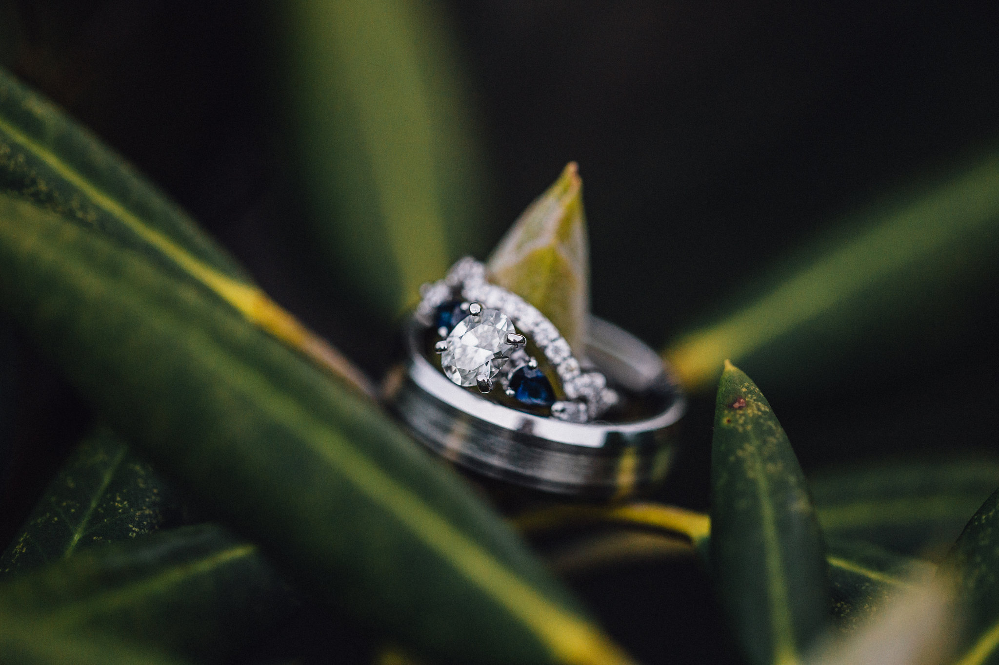 Wedding Rings on a blade of grass
