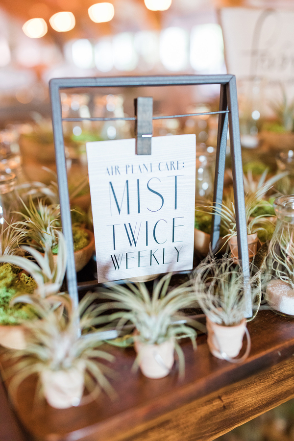 Air Plant Favors at Wedding