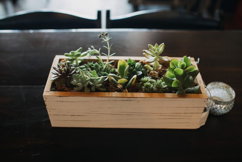 succulent decor at wedding