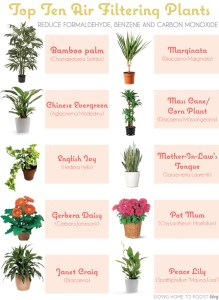 airfilteringplants