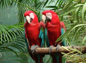 parrots talking photo Photo: enlewof / cc