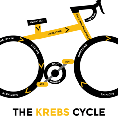 Explain Krebs Cycle With Diagram Marketing System Kill Cancer Oxygen And Ketogenic Diet Health