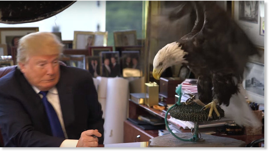 Symbolic Trump attacked by bald eagle during Time