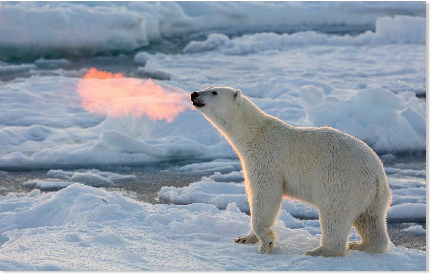Oops Scientists Who Claimed Arctic Ice Would Melt