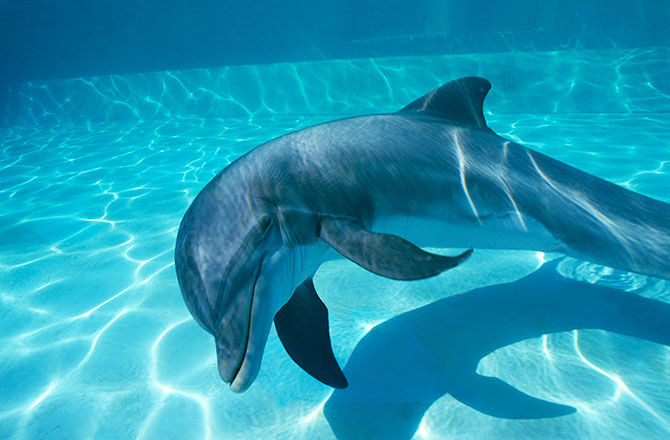 Cute Baby Live Wallpaper New Age Dolphin Assisted Birth Natural And Perhaps