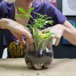Plastic Bottle Terrarium Soda Bottle Terrarium Soul Flower Blog