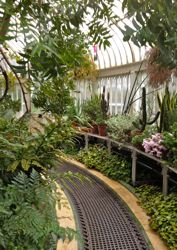 Interier view of Palm House, Belfast Botanic Gardens