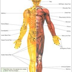 Pressure Points Diagram Massage Marine Wiring Diagrams Schematics Images Gallery