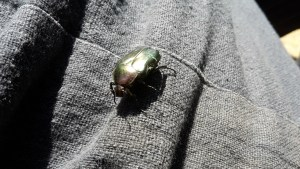 a large shiny green beetle on material