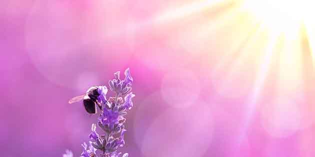 Does Your Soul Weigh as Much as a Dead Bee?