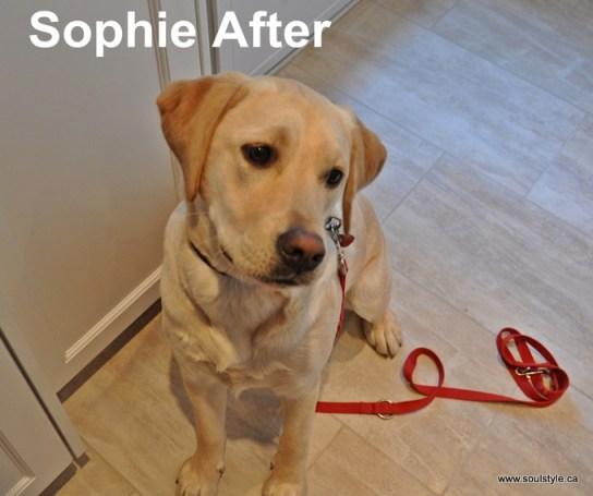 Sophie After (2)
