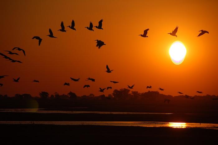 Pellicani al tramonto in Botswana